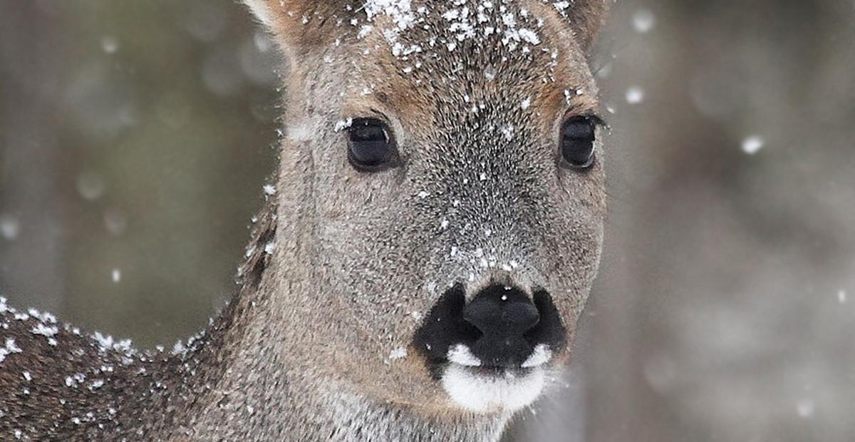 Pirma jauniklio žiema. R. Barausko nuotr.