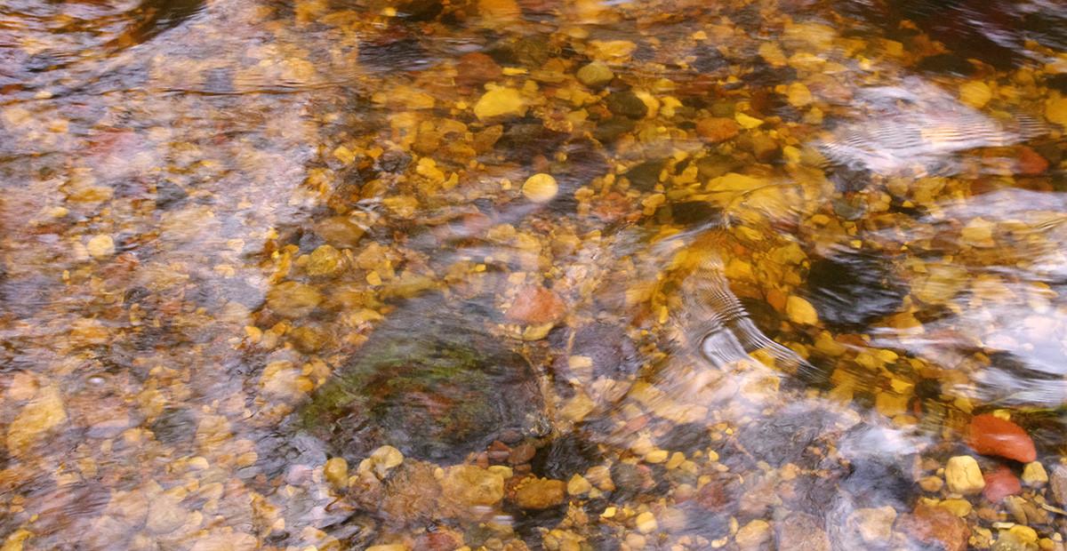 Lašišos užkasa savo ikrus sraunumose, kuriose dugnas nusėtas smulkiais akmenėliais